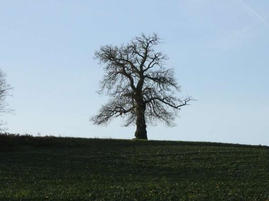 photos de paysages de Lavardin